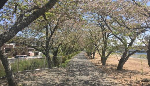 浜松市北区細江町の都田川桜堤に行ってみました