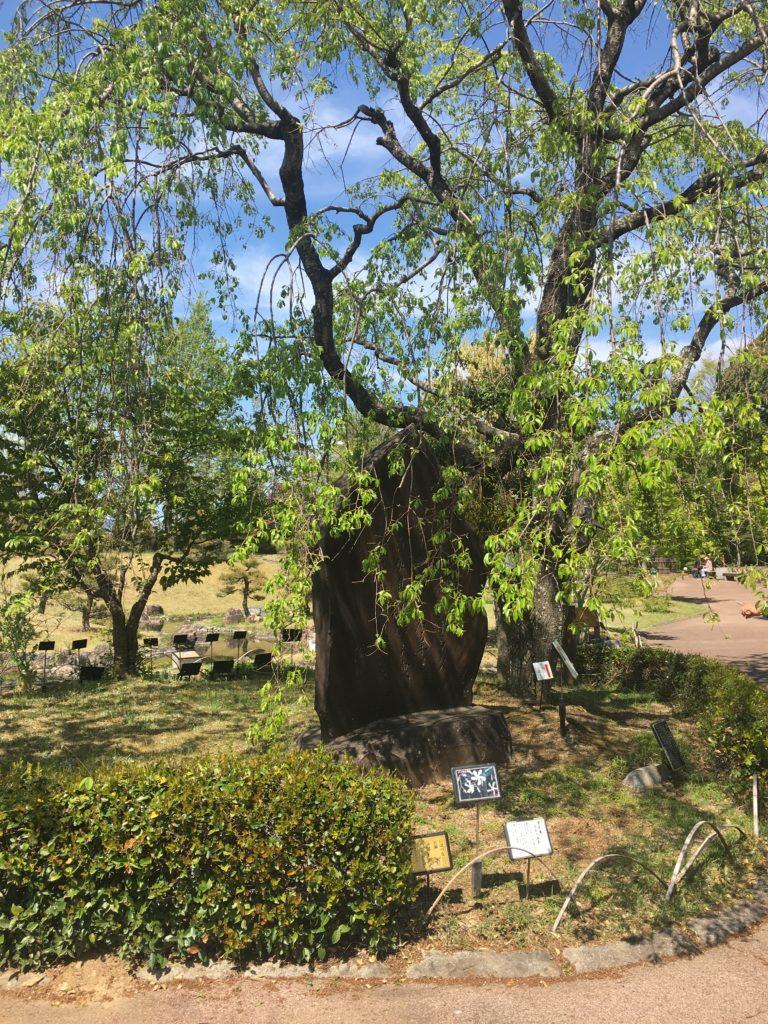 万葉の森公園の木